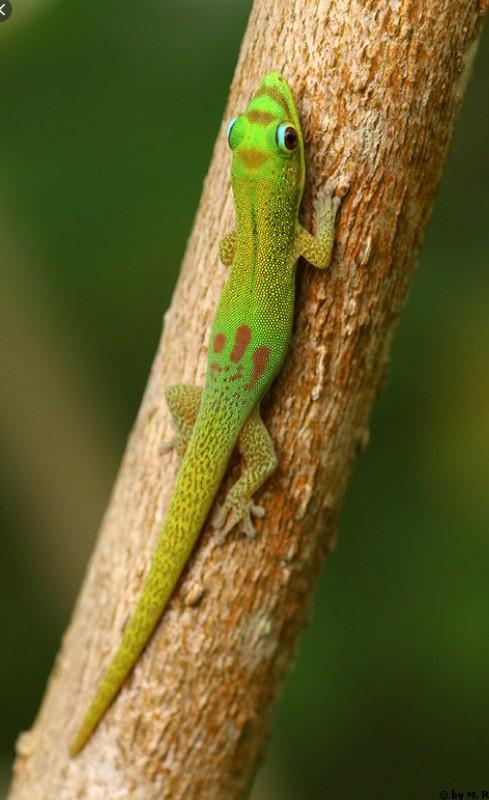 Gecko mit Terrarium zu verschenken