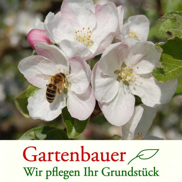 Ramins Gartenbau und Gartenpflege