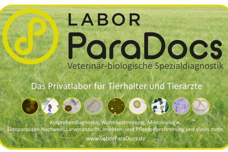Labor ParaDocs