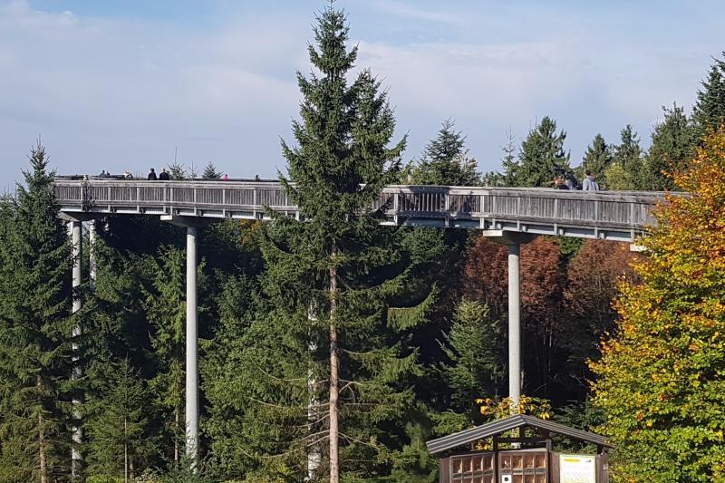 Kulturfahrt zum Wald-Wipfel-Weg