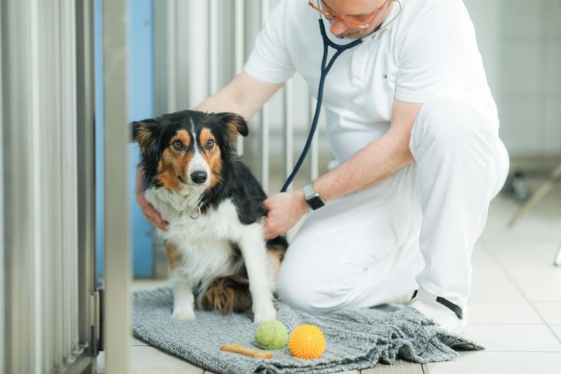 Tierklinik Ismaning
