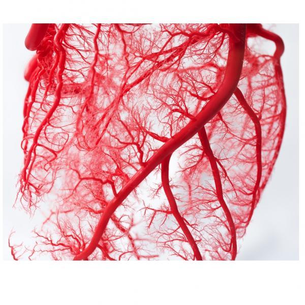 Die Mikrozirkulation ist die Hauptstraße Ihrer Gesundheit!