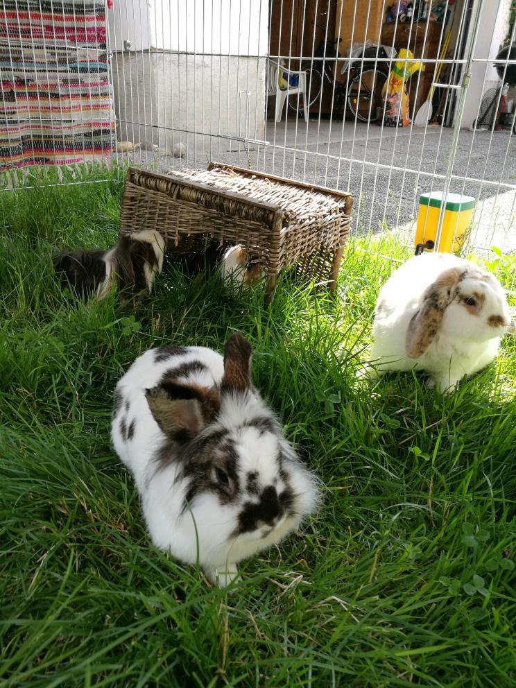 Warum für Kaninchen und Meerschweinchen die Getreideernte wichtig ist